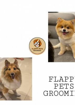 flappy-pets-grooming-small-0